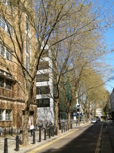 Spring growth. London Plane trees along Howland Street will provide shade and a pleasant walking environment. Large broad leaf trees like these provide natural air conditioning.