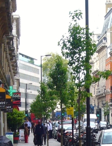 New trees along Great Portland Street.